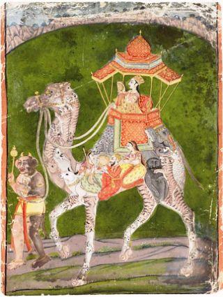 iranian-cammello