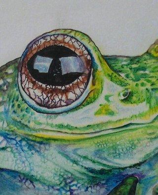 occhio-di-rana