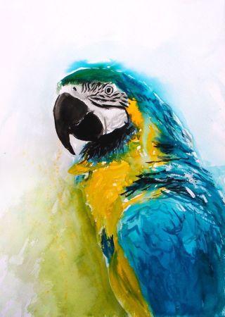 pappagallo-fiaba