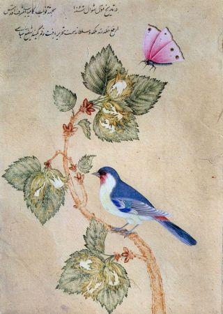 fiore-usignolo-persiano