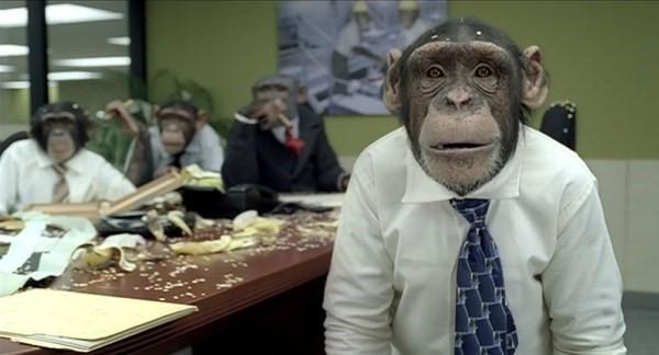 scimmie-vestite