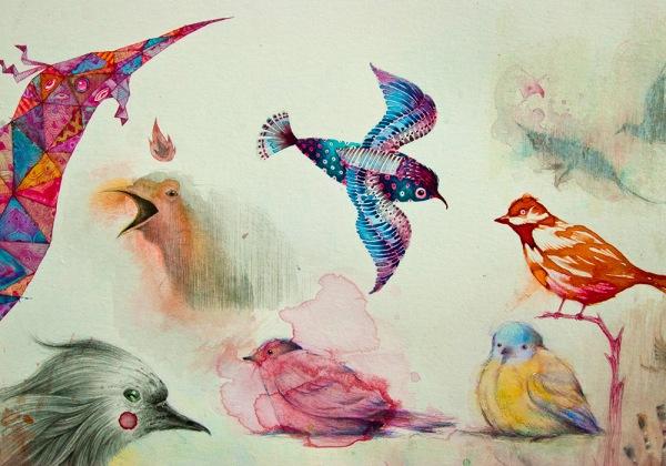 uccelli-colori