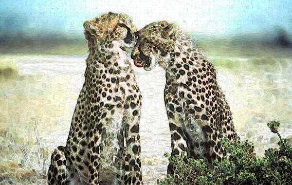 giaguari-due