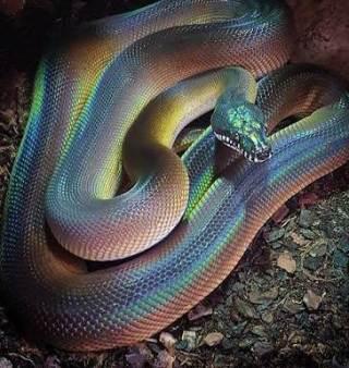 serpente-squame-luccicanti