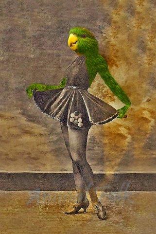 donna-pappagallo