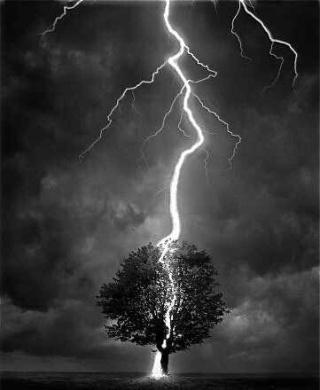 fulmine-albero