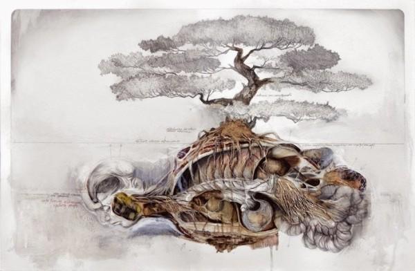 Pacis-anatomia