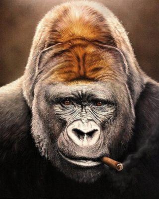 scimmia-sigaro