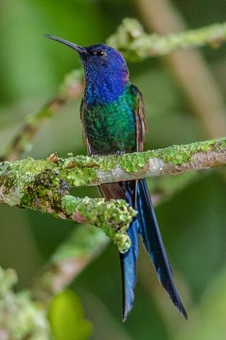 uccello-mosca