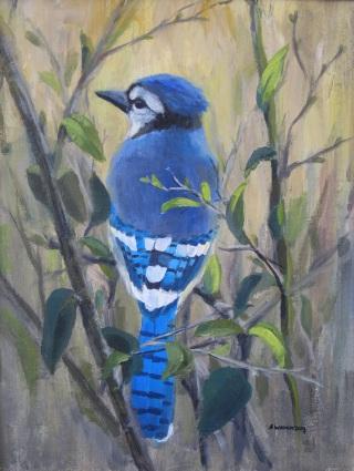 ghiandaia-azzurra-dietro