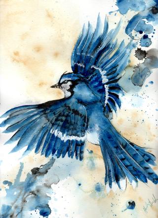 ghiandaia-azzurra-paint