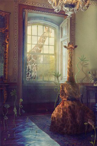 Petolas-giraffe