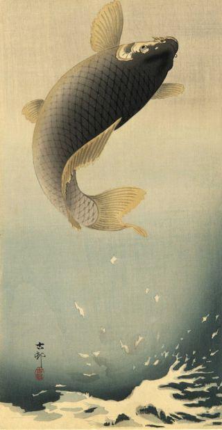salmone-volante