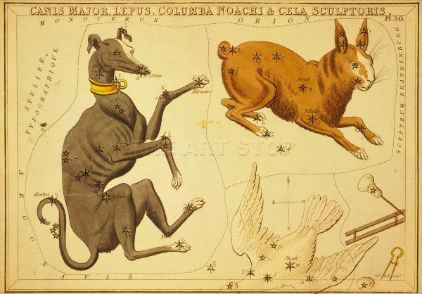 astra-cane-lepre