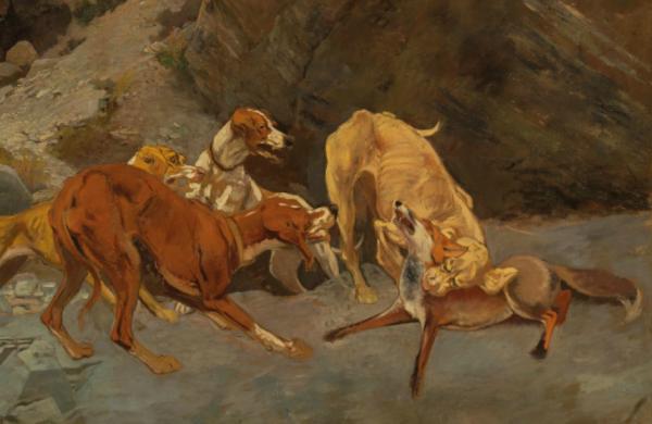 Cecconi-volpe-cani