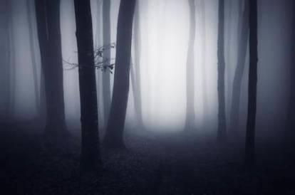 foresta-nebbia