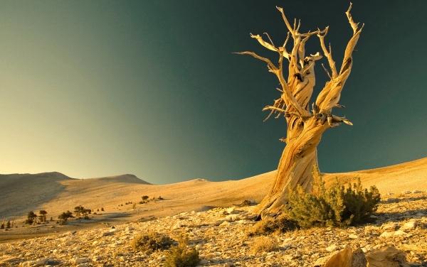 paesaggio-carestia
