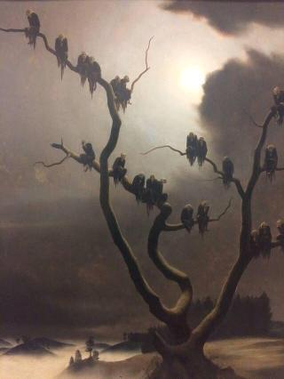 Sedlacek-avvoltoi