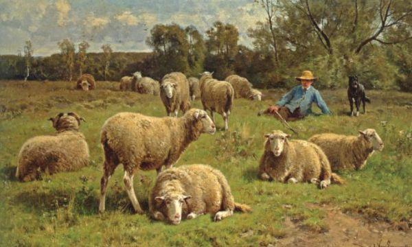 van-Leemputten-pecore
