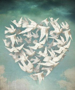 schloe-cuore-uccelli
