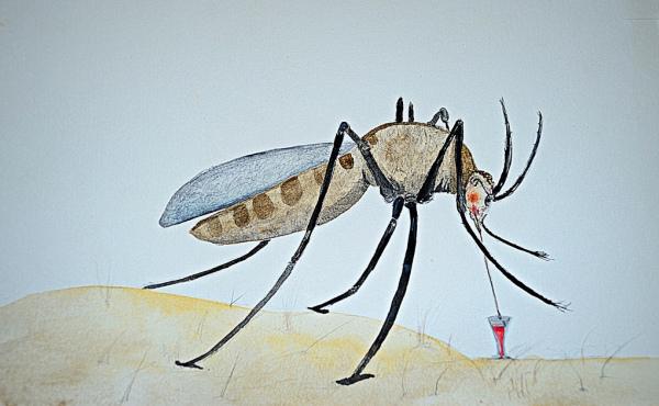 verstappen-zanzara