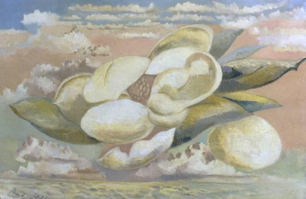Nash-magnolia