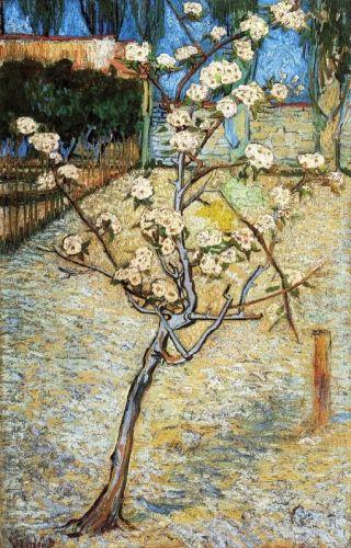 van Gogh-pero-in-fiore