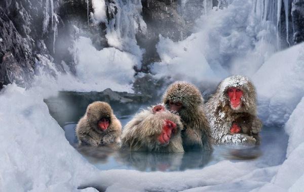 babbuini-ghiacci