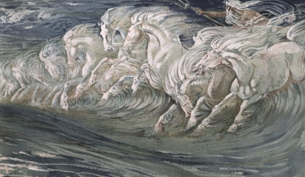 Crane-cavalli-Nettuno