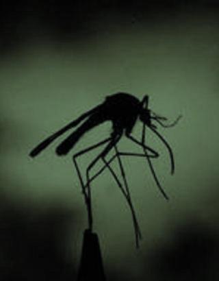 mosquito-Nilo