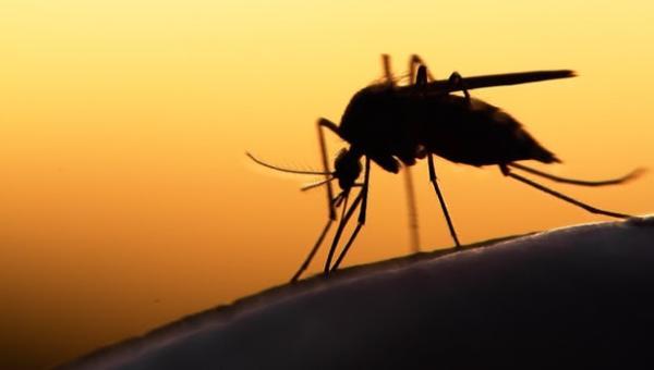 zanzara-malaria