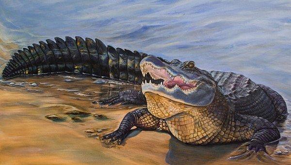 Stromberg-alligatore