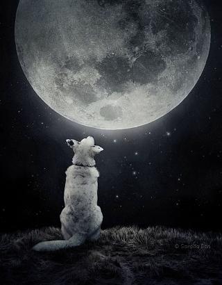 Ban-cane-luna