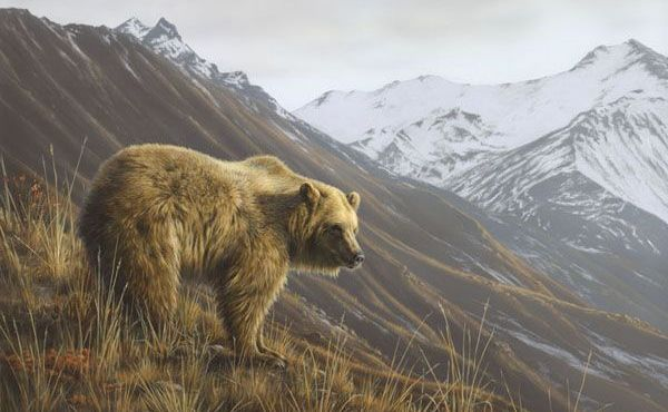 orso-grizzly-montagne