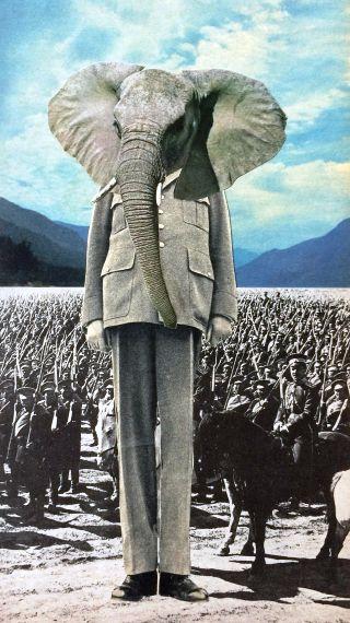 generale-elefante