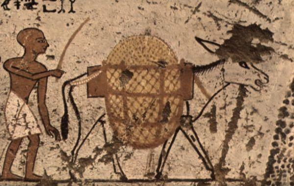 asino-antico-Egitto