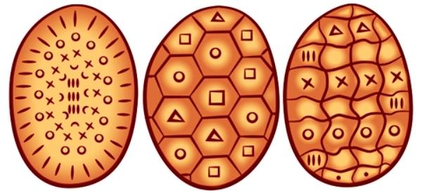 gusci-tartaruga