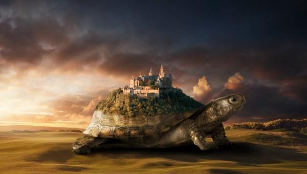tartaruga-regge-città