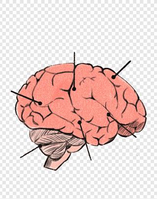 cervello-chiodi
