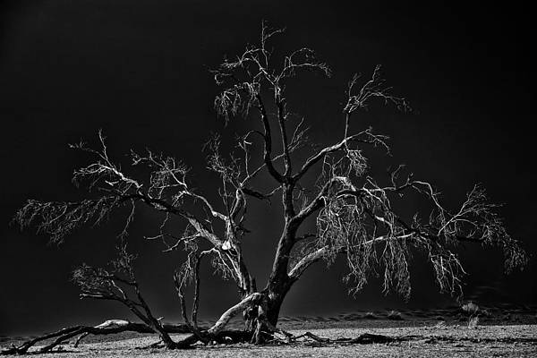 Namib-albero-dark